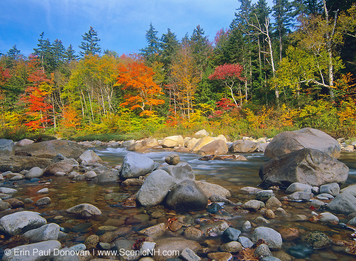 Fall foliage along the Swift River, near the Kancamagus Highway (route 112), in the White Mountains of New Hampshire. The Kancamagus Highway is known for having outstanding autumn foliage.