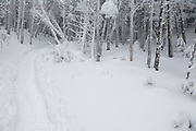 Snow covered softwood forest along the Willey Range Trail in the White Mountains, New Hampshire during the winter months.
