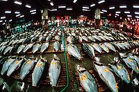 Pacific bluefin tuna, Thunnus orientalis, yellowfin tuna, Thunnus albacares, and bigeye tuna, Thunnus obesus, Tsukiji Market, or Tokyo Metropolitan Central Wholesale Market, Tsukiji, Tokyo, Japan, Pacific Ocean