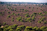 Spanien, Andalusien, Naturpark Coto de Donana, UNESCO-Weltnaturerbe