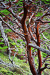 Colorful trees taken in Point Lobos, California