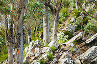 Image Ref: YR142<br /> Location: Cathedral Range State Park<br /> Date: 27.01.17