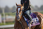 OCT 27 2014:Majestic Presence, trained by Jerry Hollendorfer, exercises in preparation for the Breeders' Cup Juvenile Fillies at Santa Anita Race Course in Arcadia, California on October 27, 2014. Kazushi Ishida/ESW/CSM