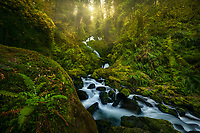 A beautiful waterfall cascades through a jungle environment of one of many rainforests in Olympic National Park.<br /> <br /> ARTIST CHOICE: 24x36 Lumachrome/Acylic