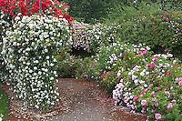 Path through display garden of roses at Heirloom Gardens, Oregon