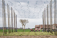 passing the hop fields<br /> <br /> 83rd Gent-Wevelgem - in Flanders Fields (ME - 1.UWT)<br /> 1 day race from Ieper to Wevelgem (BEL): 254km<br /> <br /> ©kramon