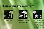 Panneau Attention casoars dans la reserve de Daintree  Queensland