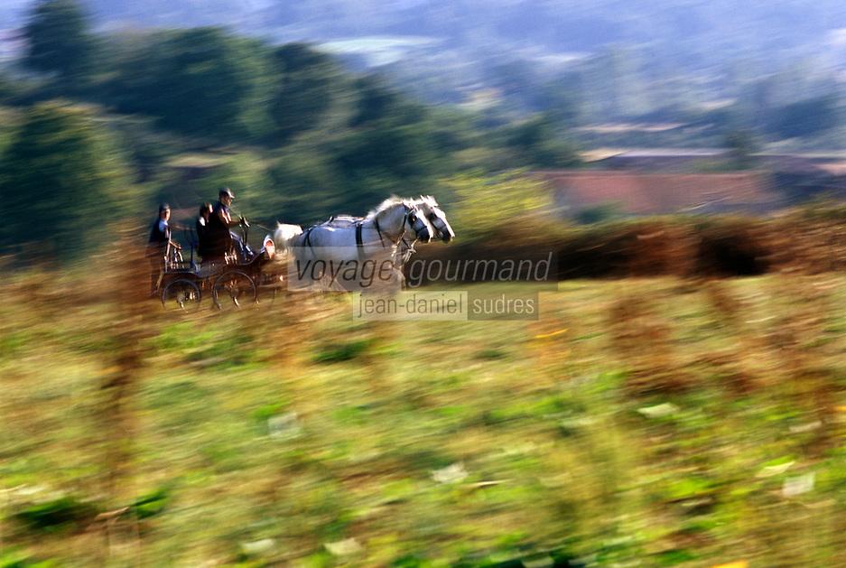 Europe/France/Basse-Normandie/61/Orne/Perche/La Mesnière: attelage de chevaux Percherons de la ferme de Montaumer  // Europe / France / Lower Normandy / 61 / Orne / Perche / La Mesnière: team of Percheron horses from the Montaumer farm