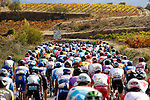 The peloton during Stage 8 of the Vuelta Espana 2020 running 160km from Logroño to Alto de Moncalvillo, Spain. 28th October 2020.   <br /> Picture: Luis Angel Gomez/PhotoSportGomez | Cyclefile<br /> <br /> All photos usage must carry mandatory copyright credit (© Cyclefile | Luis Angel Gomez/PhotoSportGomez)