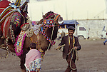 Asia, TUR, Turkey, Aegean Coast, Aegean, Soke, Camelfighter with Camel