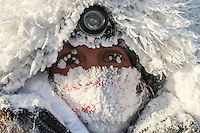 Kristi Berington is frosted up after a 40 below zero run into the Huslia checkpoint on Saturday  March 14, 2015 during Iditarod 2015.  <br /> <br /> (C) Jeff Schultz/SchultzPhoto.com - ALL RIGHTS RESERVED<br />  DUPLICATION  PROHIBITED  WITHOUT  PERMISSION