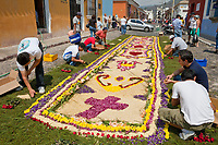 Antigua, Guatemala. Workers complete an alfombra (carpet) of flowers, sawdust, pine needles, and other traditional materials decorating the street in advance of the passage of a procession during Holy Week, La Semana Santa.  The alfombra will be finished only a couple of hours before the passage of the procession, after which the remains will be quickly swept away by municipal street sweepers.