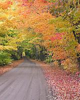 Tunnel of Trees, Keweenaw Peninsula, Michigan