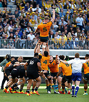 5th September 2021; Optus Stadium, Perth, Australia: Bledisloe Cup international rugby, Australia versus New Zealand; Matt Philip of the Wallabies wins the line out