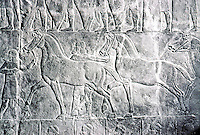 Assyria:  The King's horses being led to his chariot for lion hunt. Palace of Ashurbanipal, 650 B.C.  Photo '85.