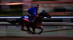 OCT 27: Breeders' Cup Filly & Mare Turf entrant Castle Lady, trained by Henri Alex Pantall, at Santa Anita Park in Arcadia, California on Oct 27, 2019. Evers/Eclipse Sportswire/Breeders' Cup