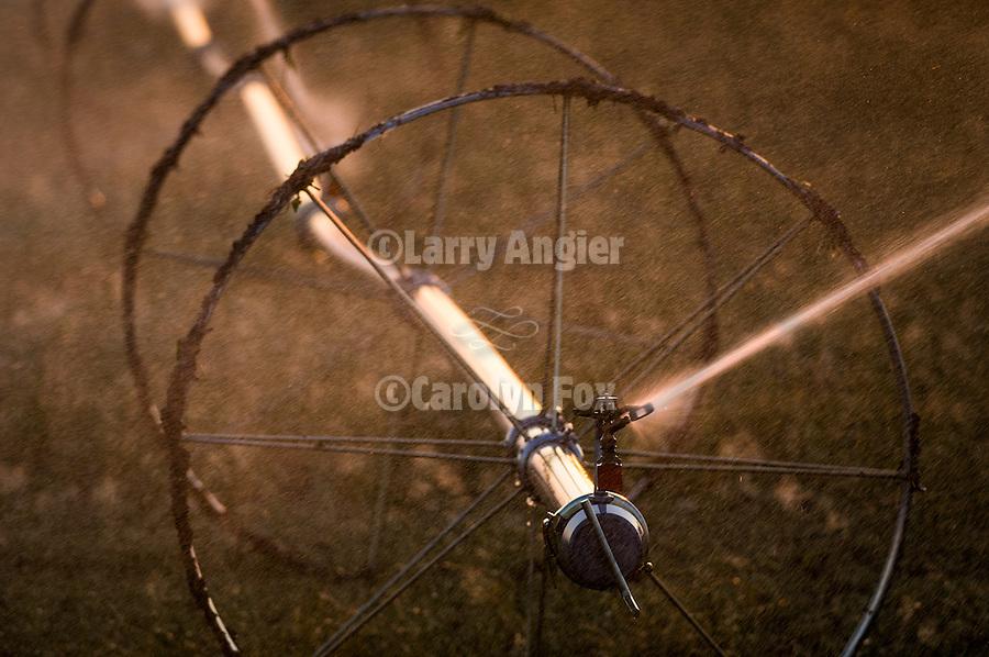 Wheelmove sprinkler irrigation on a field in California's San Joaquin Valley
