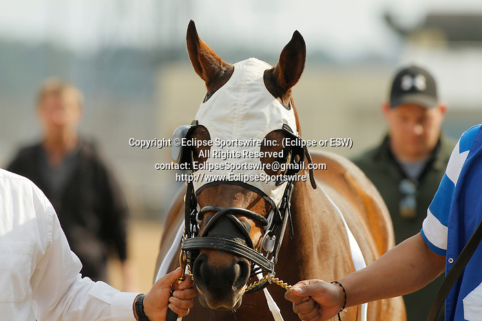 #9 Ireland before the running of the Honeybee Stakes (Grade III) at Oaklawn Park in Hot Springs, Arkansas-USA on March 8, 2014. (Credit Image: © Justin Manning/Eclipse/ZUMAPRESS.com)