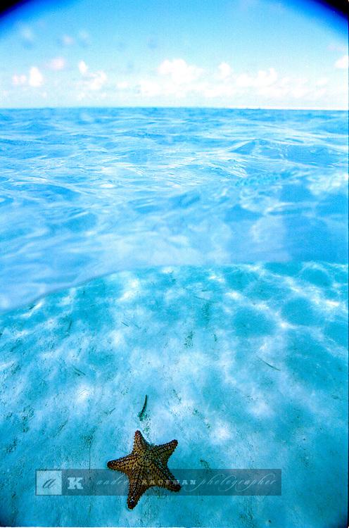 A seastar in the Bahamas, Exuma.