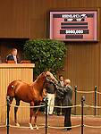 13 September 2010.  Hip #157 Distorted Humor - Hookedonthefeelin colt, sold for $900,000 at the Keeneland September Yearling Sale.   Consigned by Gainesway.