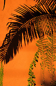 Sao Paulo, Brazil. Shadow of a palm leaf on a terracotta wall, green leaves of climbing plants.