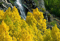 A spring fed waterfall which drains into BISHOP CREEK is surrounded by golden QUAKING ASPENS - SIERRA NEVADA, CA