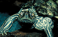 Turtle, head and shell, closeup.