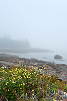 Misty coastline, Bernard, Maine, USA