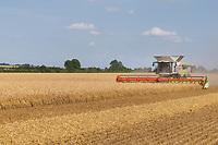 19.7.2021 Harvesting Winter Barley in Rutland<br /> ©Tim Scrivener Photographer 07850 303986<br />      ....Covering Agriculture In The UK....