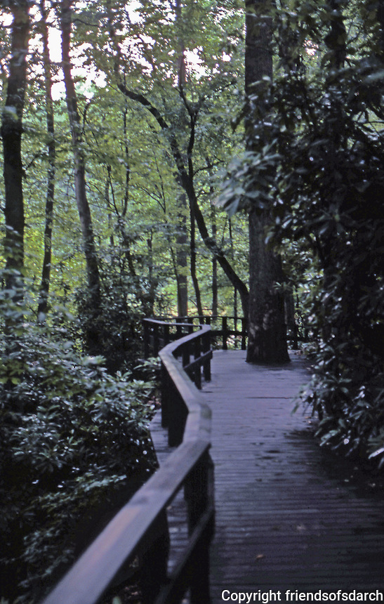 F.L. Wright: Fallingwater. Approach through woods.  Photo '76.