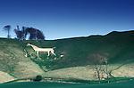Cherhill White Horse, Cherhill, Wiltshire  England