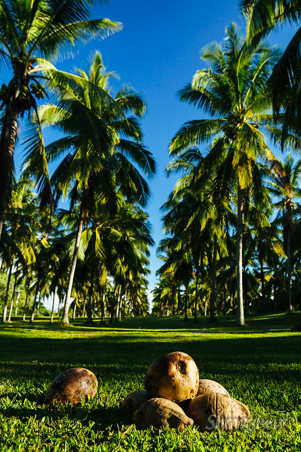 Image Ref: CA136<br /> Location: Port Douglas<br /> Date: 3 April 2015