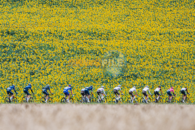 The peloton passes by sunflower fields during Stage 17 of the 2021 Tour de France, running 178.4km from Muret to Saint-Lary-Soulan Col du Portet, France. 14th July 2021.<br /> Picture: A.S.O./Charly Lopez | Cyclefile<br /> <br /> All photos usage must carry mandatory copyright credit (© Cyclefile | A.S.O./Charly Lopez)