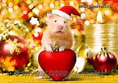 Xavier, CHRISTMAS ANIMALS, WEIHNACHTEN TIERE, NAVIDAD ANIMALES,hamster, photos+++++,SPCHHAMSTER156,#XA#