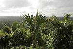 Mountaintop view overlooking Belize's Sarstoon Temash National Park, Belize's second largest park.