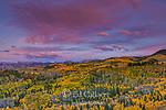 Sunset, Aspen, Populus Tremula, Dallas Divide, Uncompahgre National Forest, Colorado