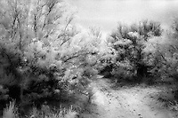 Infrared path, Bloomfield New Mexico.<br /> <br /> Nikon F3HP, 24mm lens, Kodak High Speed infrared film, red filter