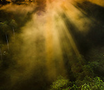 Sun beams and sun rise over the forest canopy. Lowland Amazon rainforest near Napo River, Ecuador.