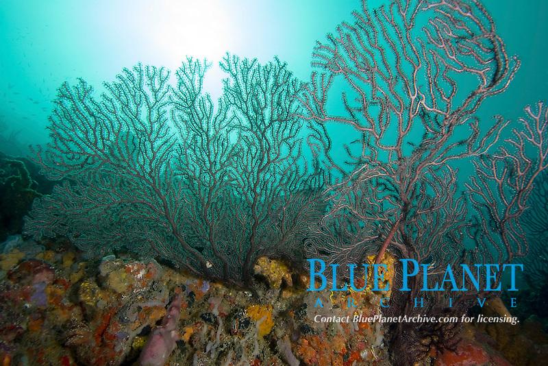 Reef scene, Bequia, Caribbean