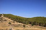 Amatzia Forest