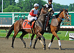 Air Support (no. 7), ridden by Alex Solis and trained by Claude McGaughey III, before the grade 1 United Nations Stakes for three year olds and upward on July 07, 2012 at Monmouth Park in Oceanport, New Jersey.  (Bob Mayberger/Eclipse Sportswire)