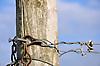 Weinbergstickel am Ende einer Rebzeile mit verrosteter Drahtspannkette und verbliebener, getrockneter bzw. verholzter Weinrebenranke am Draht