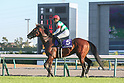 Horse Racing: 2019 Champions Cup