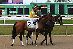 NEW ORLEANS, LA - FEBRUARY 20:<br />  Point Piper #2 ridden by Julien R Leparoux in the post parade for the Mineshaft Handicap Stakes in the Louisiana Derby Preview Race Day at Fairgrounds Race Course on February 20,2016 in New Orleans, Louisiana. (Photo by Steve Dalmado/Eclipse Sportswire/Getty Images)