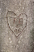 Initials carved into a Beechnut Tree on the side of a hiking trail in a New Hampshire USA