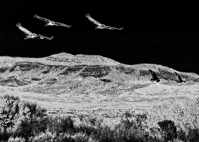 creative black and white image of three sandhill cranes flying in the National Wildlife Refuge in Bosque del Apache, New Mexico