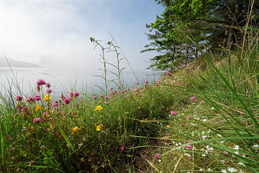 Spring wildflowers on shore of Saddlebag Island, Saddlebag Island Marine State Park, Washington, USA