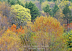 Spring Forest, Delaware Water Gap National Recreation Area, Pennsylvania