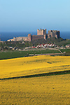 Great Britain, England, Northumberland, Bamburgh: View over Oilseed rape field to Bamburgh village and castle set on top of basalt crag