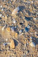 Avon, Outer Banks, North Carolina.  Broken Seashells on the Shore.
